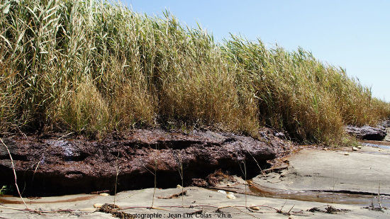Niveau de tourbe argileuses à la limite plage/dune sur les communes de Grayan-et-l'Hôpital, Vensac, et Vendays-Montalivet en Gironde