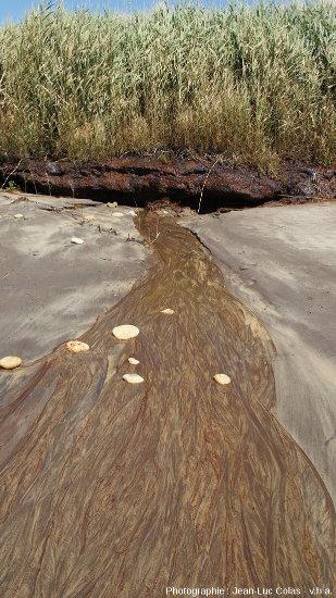 Niveau de tourbe argileuses à la limite plage/dune sur les communes de Grayan-et-l'Hôpital, Vensac, et Vendays-Montalivet en Gironde, et coulée d'eau ferrugineuse associée