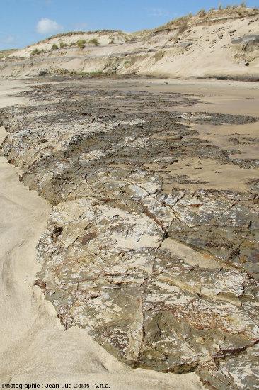 La tourbe des paléosols est souvent plus résistante à l'érosion marine que le sable des plages et des dunes