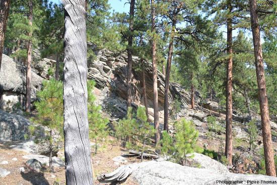Le Presidential Trail du Mont Rusmore (Dakota du Sud, USA), serpente surtout dans les micacschistes