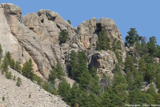 Le Presidential Trail du Mont Rusmore (Dakota du Sud, USA), serpente surtout dans les micaschistes, mais aussi dans le granite, ce qui permet de bien voir la différence morphologique entre micaschistes et granite