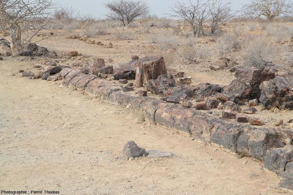 Vue partielle d'un tronc silicifié couché, Damaraland, Namibie