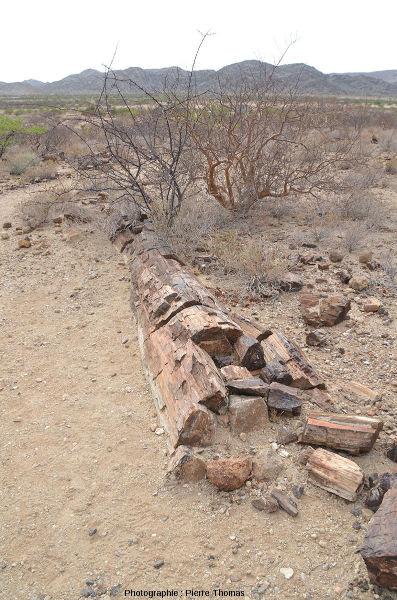 Autre vue sur ce beau tronc silicifié couché, Damaraland, Namibie