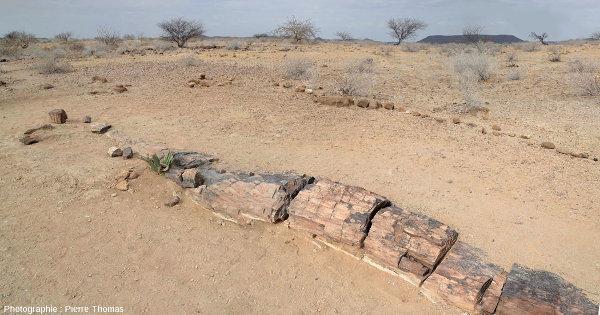 Vue d'ensemble sur un tronc silicifié couché, Damaraland, Namibie