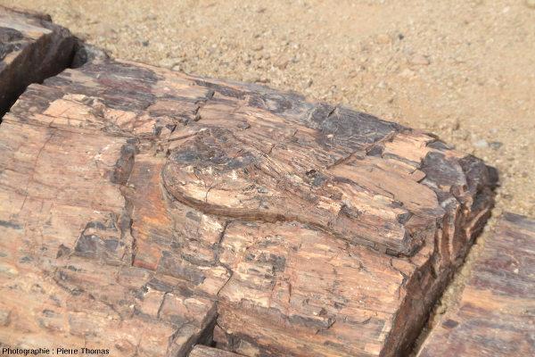 Vue de détail de ce tronc silicifié couché, Damaraland, Namibie
