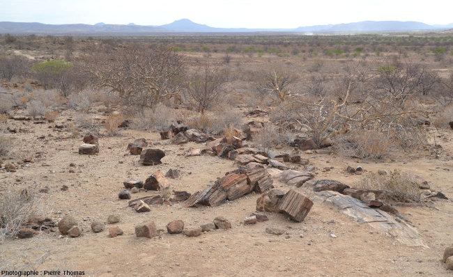 Vue depuis un sentier montrant l'abondance des fragments de troncs silicifiés jonchant la steppe arborée du Petrified Forest National Monument, Namibie