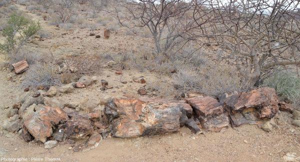 Vue d'ensemble d'un tronc montrant des cavités géodiques où ont cristallisé des cristaux automorphes de quartz, Namibie