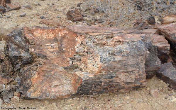 Vue rapprochée d'un tronc montrant des cavités géodiques où ont cristallisé des cristaux automorphes de quartz, Namibie