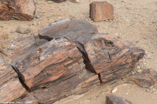 Vue de détail sur un fragment de tronc silicifié montrant bien la structure du bois et un très beau nœud (départ d'une branche) près de l'extrémité droite, Namibie