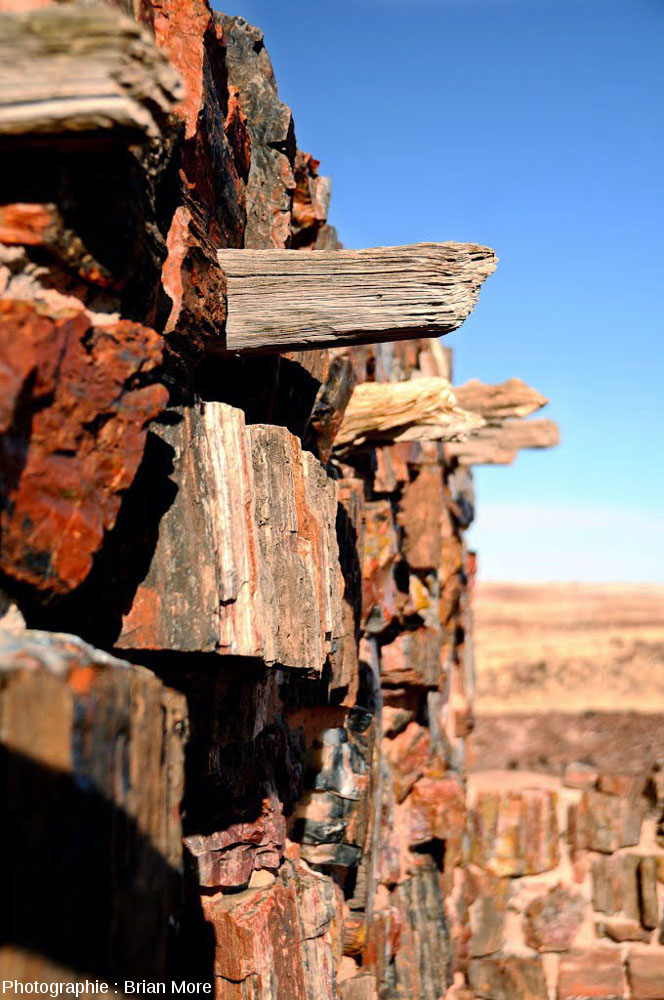Détail d'un mur de l'Agate House (« Maison d'agate ») dans le Petrified Forest National Park, Arizona (USA)
