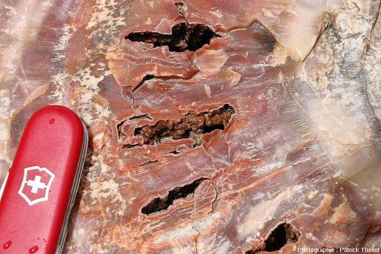 Zoom sur une section de tronc silicifié, Arizona