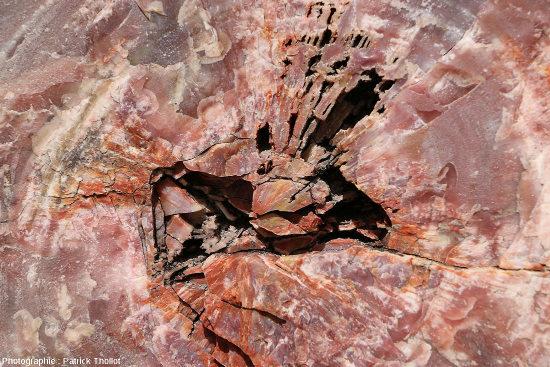 Autre détail d'une coupe transversale d'un tronc silicifié, Arizona