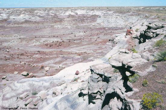 Un paysage caractéristique du Petrified Forest National Park, Arizona (USA)