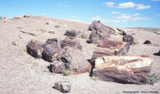 Morceaux de bois silicifié dans un paysage caractéristique du Petrified Forest National Park, Arizona (USA)