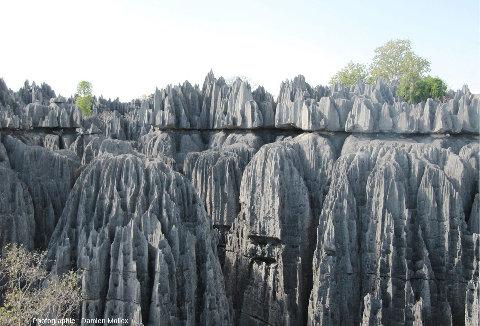 Un paysage caractéristique des Tsingy de Bemaraha (Madagascar): pinacles et dentelles de pierres aiguisées comme des couteaux, crevasses et canyons profonds...
