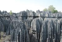 Un des plus beaux karsts tropicaux du monde, le lapiaz des Tsingy de Bemaraha, Madagascar