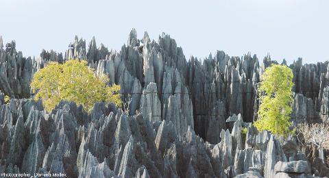 Paysage caractéristique des Tsingy de Bemaraha (Madagascar)