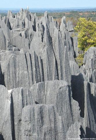 Morphologie karstique à pinacles et rigoles de dissolution des Tsingy Bemaraha (Madagascar)