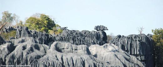 Conséquence de la présence d'une couche très érodable, des blocs presque isolés et en équilibre instable coiffent parfois les pinacles, karst des Tsingy de Bemaraha