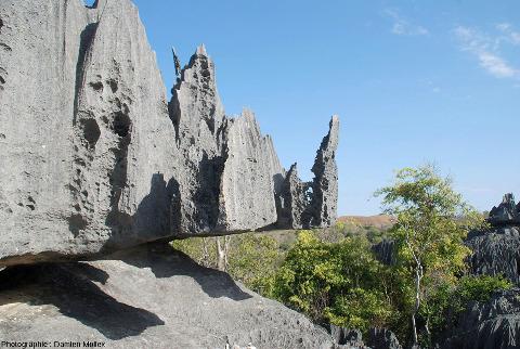"""Érosion alvéolaire du calcaire (taffonis), une morphologie différente des """"habituelles"""" rigoles de dissolution, Tsingy de Bemaraha"""