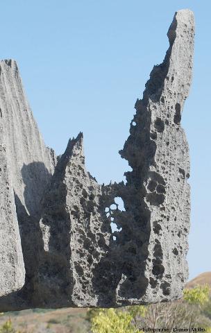 Détail de taffonis affectant par endroits le lapiaz des Tsingy de Bemarah (Madagascar)