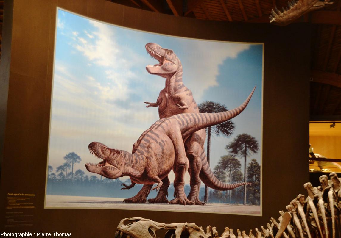 Tableau reconstituant l'accouplement de deux tyrannosaures et ce qu'on imagine de leurs couleurs, MUJA (Asturies, Espagne)