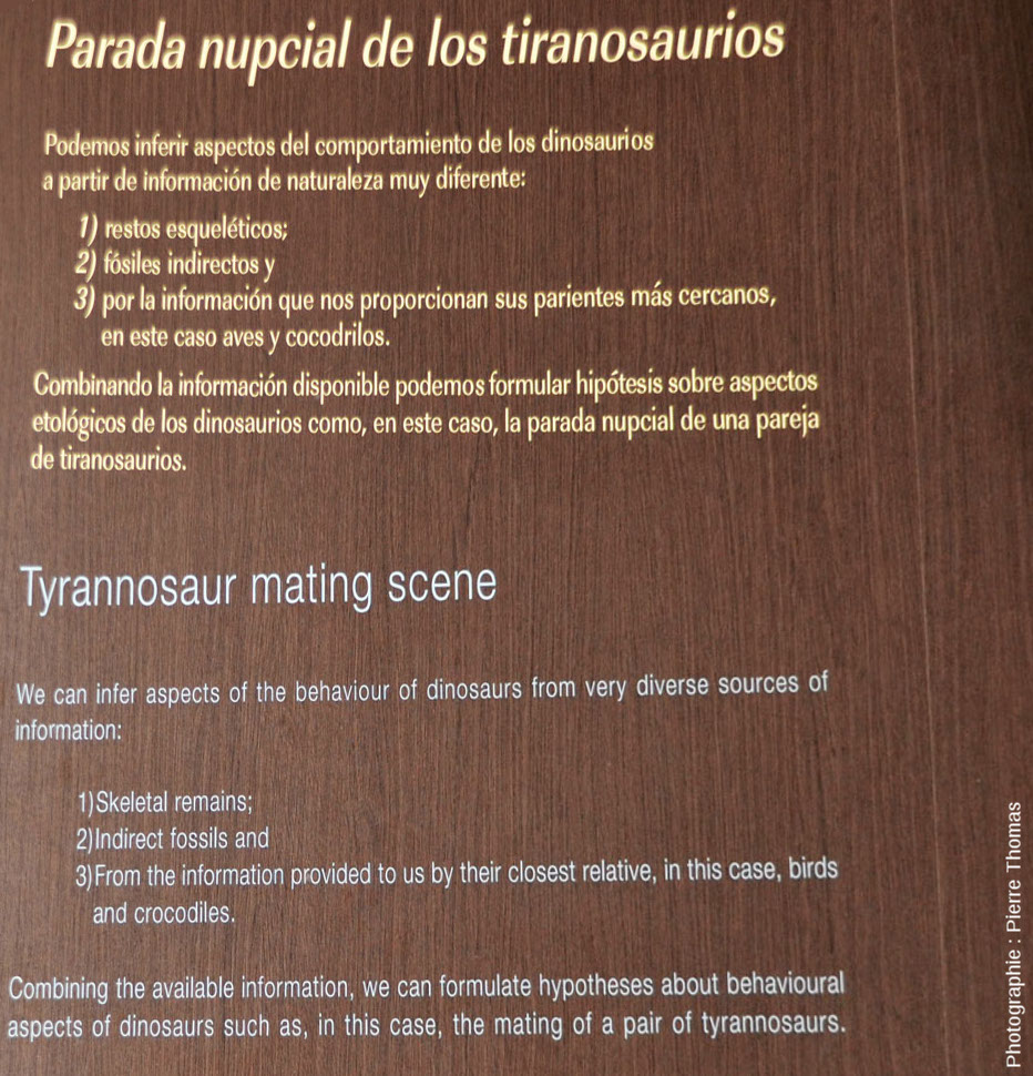 Légende bilingue accompagnant la reconstitution de l'accouplement des deux tyrannosaures, MUJA (Asturies, Espagne)