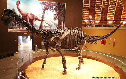 Un sauropode du Jurassique, MUJA (Espagne)