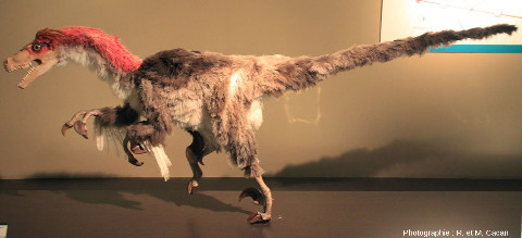 Reconstitution d'un dinosaure à plume du Crétacé inférieur, MUJA (Espagne)