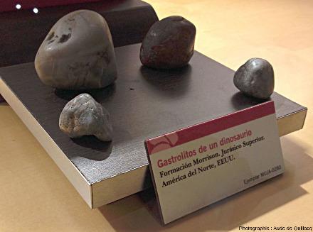 Gastrolithes de dinosaure, MUJA (Espagne)