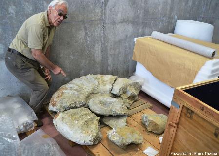Une ammonite de belle taille en cours de restauration, Musée du Jurassique des Asturies (MUJA), Colunga, Asturies, Espagne