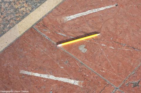 Dalles de calcaire rouge fossilifère pavant la galerie couverte qui fait trois quarts du tour de la place Charles Béraudier, devant la gare de la Part-Dieu à Lyon