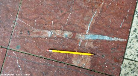 Le plus long des orthocères visibles sur le parvis de la Part-Dieu (Lyon)