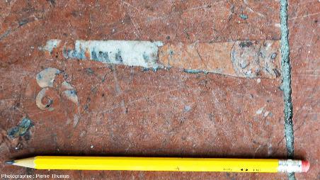 Orthocère disposé juste à proximité d'un céphalopode à coquille spiralée, vraisemblablement une goniatite, dalle du parvis de la gare de la Part Dieu, Lyon