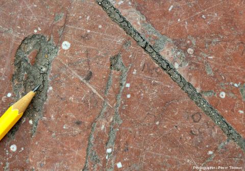 """Dalle de """"marbre"""" rouge du parvis de la Part Dieu montrant de nombreuses sections d'articles de crinoïdes de petite taille"""