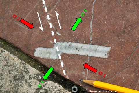 """Interprétation """"tectonique"""" de la faille affectant cette tige de crinoïde"""