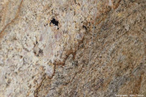 Détail sur un filon de pegmatite recoupant des migmatites, aéroports de Johannesbourg, Afrique du Sud