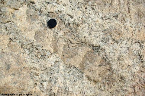 Très gros cristal de feldspath d'un filon de pegmatite recoupant un encaissant gneissique, Namibie