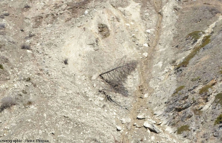 Arbres (mélèzes, peut-être déjà morts, mais de toute façon sans aiguilles en avril) inclinés par le mouvement du sol et du sous-sol