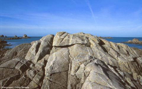 Réseau de filons de pegmatite recoupant un granite breton, le granite de Brignogan-Plouescat, rochers de Toul al Nouch, Plougoulm, Finistère
