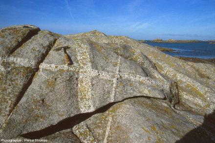 Détail du réseau de filon de pegmatite des rochers de Toul al Nouch, Plougoulm, Finistère