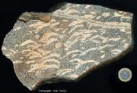 Quelques échantillons de pegmatites extraordinaires
