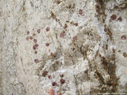 """Zoom arrière sur les grenats automorphes dans un gneiss leptynitique en """"enclave"""" dans le granite du Velay"""