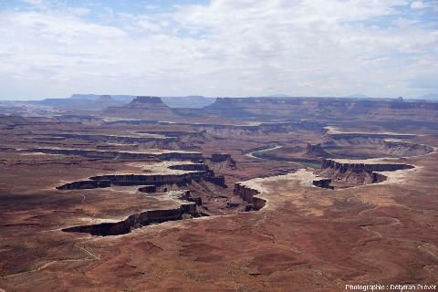 Vue globale sur des reculées entaillant la rive gauche de la Green River (affluent du Colorado), Green River Overlook, Parc national de Canyonlands, Utah (USA)