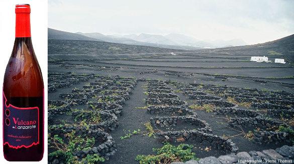 """Pieds de vigne entourés de murets """"protège vent"""" et poussant sur les scories basaltiques émise entre 1730 et 1736 (éruption du Timanfaya) dans la vallée de la Geria, au centre de l'ile de Lanzarote (archipel des Canaries)"""