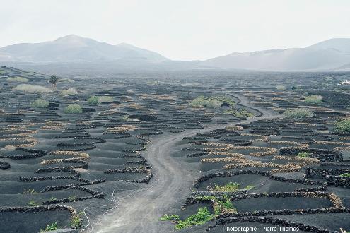Champ de zocos, avec chaque fois un unique pied de vigne au centre du muret circulaire, vallée de la Geria, ile de Lanzarote (Canaries)