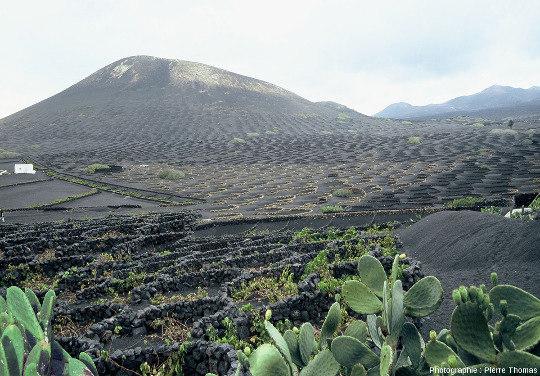 Vue d'ensemble d'un cône de scorie datant de l'éruption de 1730-1736 montrant que la vigne est cultivée tout autour du cône et même sur la moitié inférieure de ses pentes, Lanzarote (Canaries)