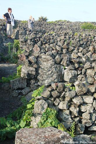 Détail d'un muret en pierres sèches, ile de Pico, Açores