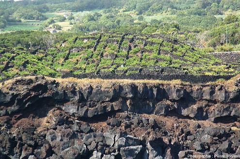 Vue sur un secteur quelques kilomètres au Sud de Criação Velha, secteur où les coulées de lave (d'âge sans doute plus proche de −40000ans que du 15ème siècle) sont plantées en vigne sur une bande relativement étroite