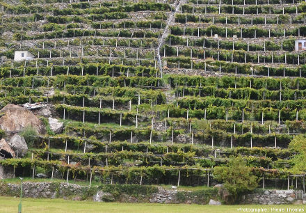 Vignoble en terrasse de Donnas (Vallée d'Aoste, Italie)